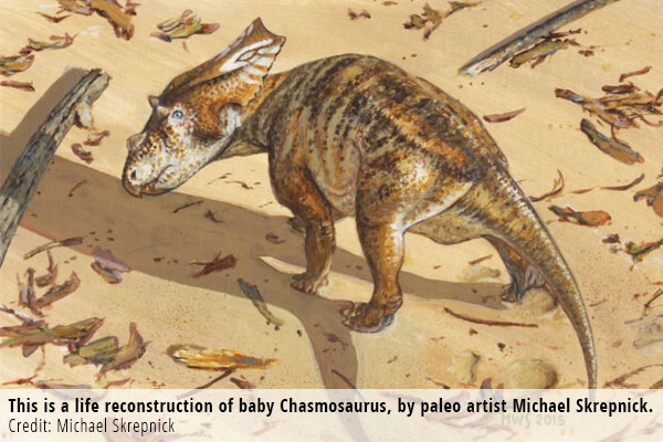 This is a life reconstruction of baby Chasmosaurus, by paleo artist Michael Skrepnick. Credit: Michael Skrepnick