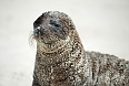Galapagos Seal Lions are a frequent sight and are fearless