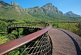 Elevated walkway in the Kirstenbosch botanical gardens, Cape Town