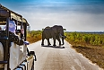 Safari in Kruger National Park - African Elephants